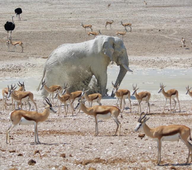 Olifant neemt een bad