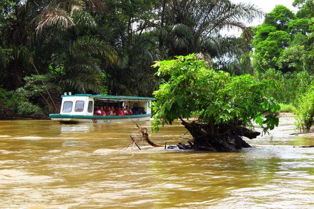 Boottocht naar Tortuguero