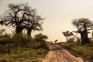 Mapungubwe, 's morgens vroeg