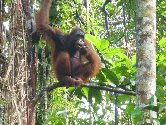Borneo met kinderen
