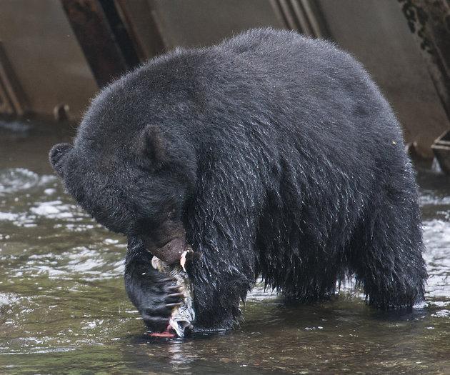 zwarte beer met zalm