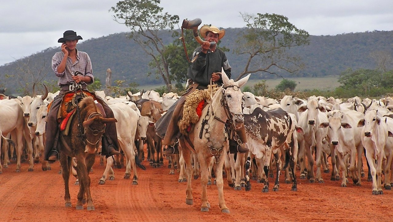 Cowboys in Brazilie