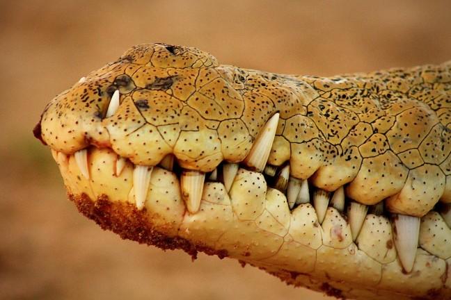 Killer Teeth op de Rufiji-Rivier
