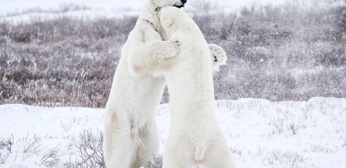 Vechten in de sneeuw