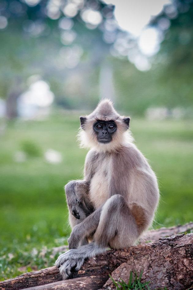 Lief klein aapje