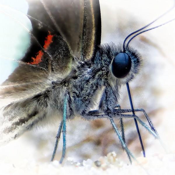 '516018' door Dragonfly