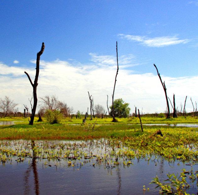 Varen in moerasgebied