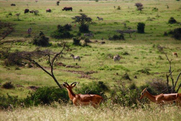 Dieren-zoekplaatje in Kenia