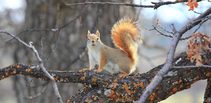 Verduiveld een eekhoorn@Devils Tower NP