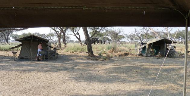 24 uur safari (panorama)