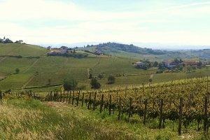 Eindeloze wijngaarden in Piemonte