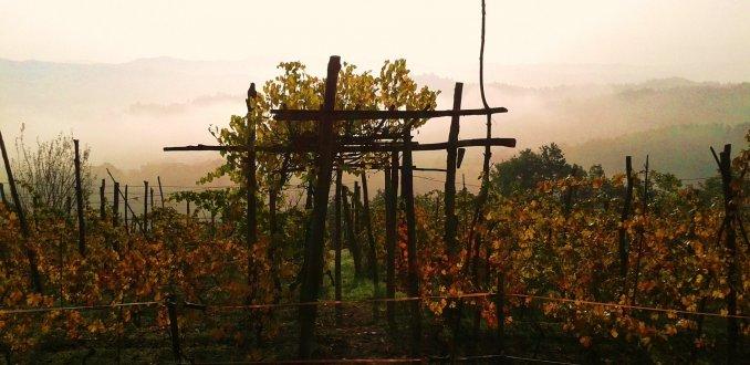 Herfstige wijngaarden