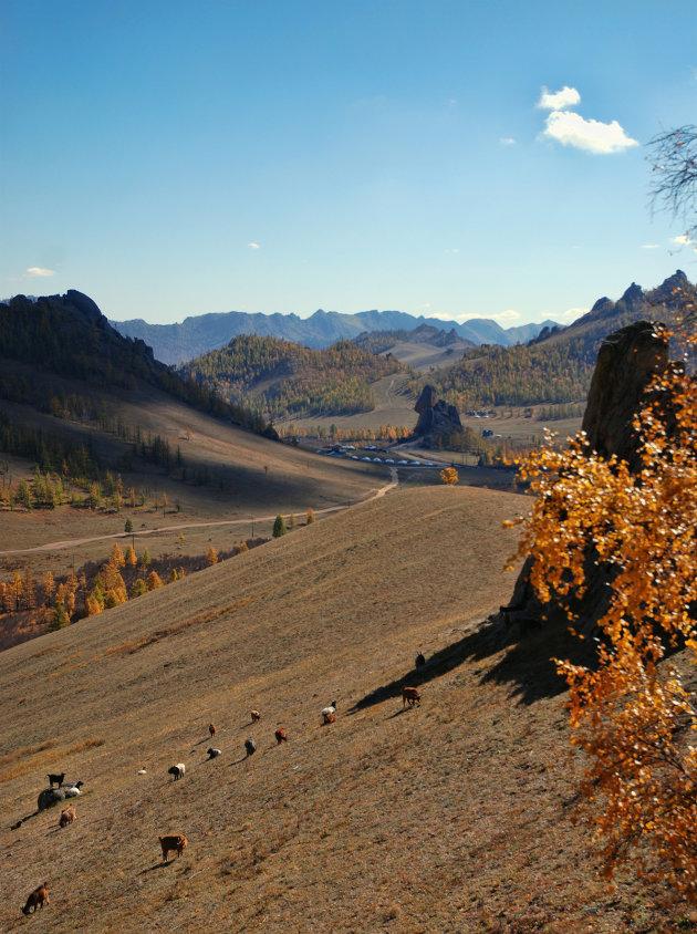 Zicht op Terelj NP Mongolië