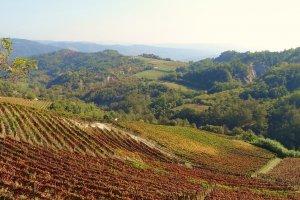 De panoramische wijngaarden van wijnhuis Cascina Bertolotto