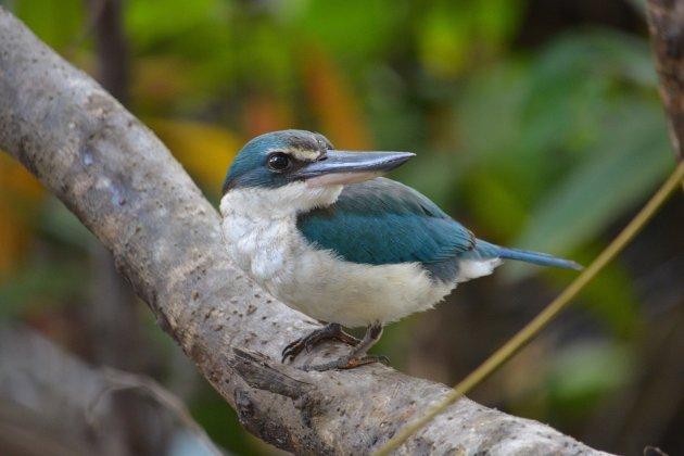 Saving Mangrove Wildlife