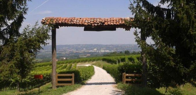 La Morra wijngaarden, Piemontese pareltjes