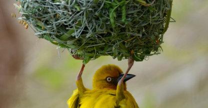 Vogels spotten in Oudtshoorn