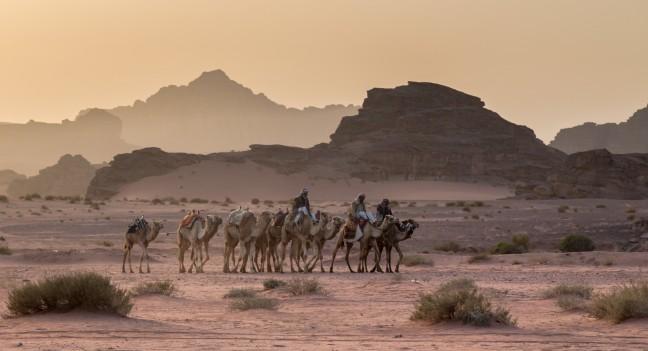 Dromedarissen in de woestijn