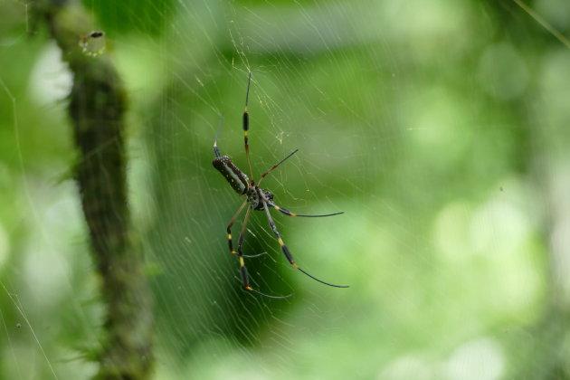 Spinnetjes in Nicaragua