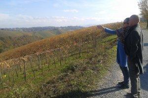 De wijngaarden van wijnhuis Scarpa