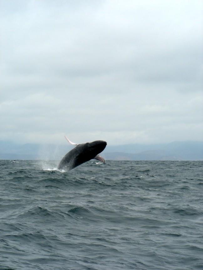 en de walvis sprong...