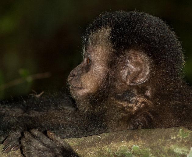 Aapje bij Iguazu