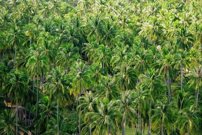 Overnachten in een Palmenzee