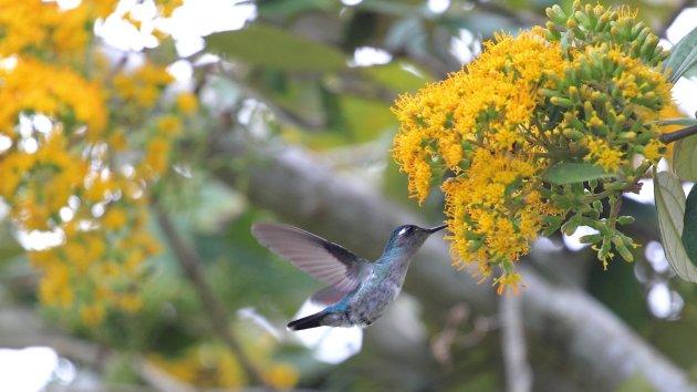 Het vogelrijk Costa Rica 3