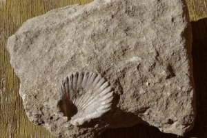 Fossielen zoeken op de calanche
