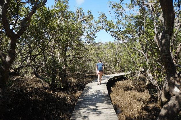 De Haruru Falls Track wandelen