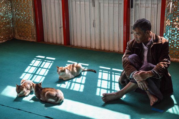 Heilige katten in Birma