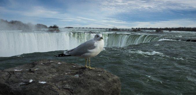 Niagara Falls met wildlife ;)