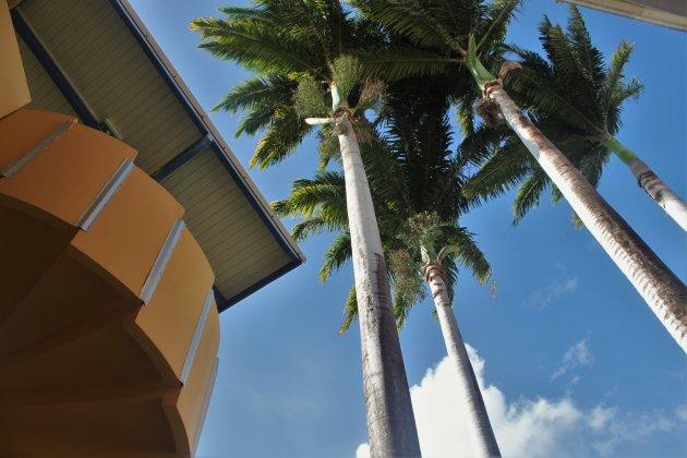 Hangmatblues vanuit Guadeloupe