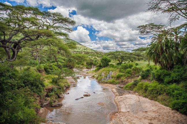 Tropisch Serengeti