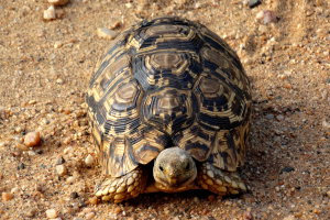 Vergeet de schildpad niet