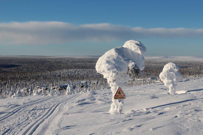 Sneeuwboom
