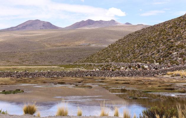 Lama's in de bergen