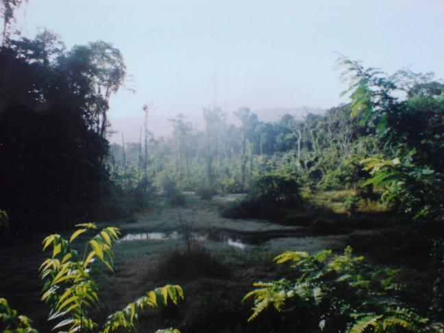 2001-2002 Goudveld in het Brownsberg Natuurpark.
