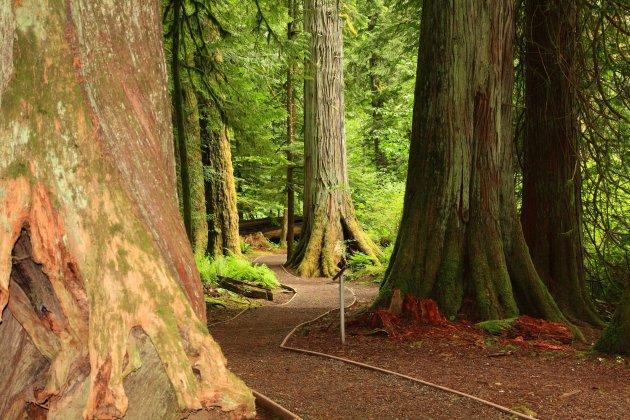 Wandel langs 800 jaar oude bomen