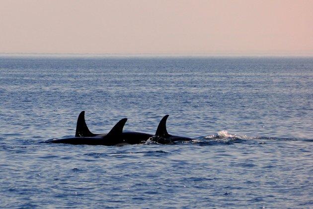 Walvissen spotten !.