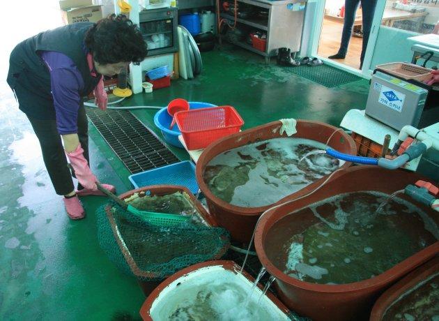Sinnam Vismarktjacht