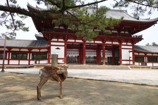 Herten kijken in Nara