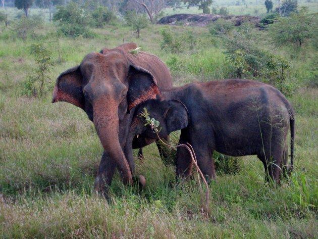 Even knuffelen met moeders