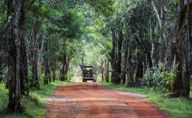 Wilpattu Nationaal Park