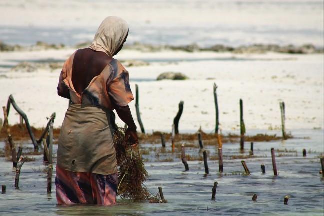 Tuinieren in Zee