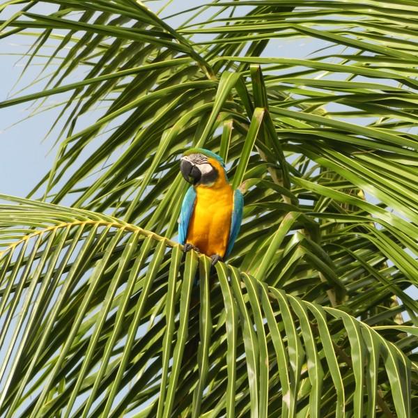 '530608' door Suriname