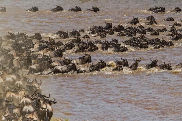 de migratie - zwemmen voor je leven