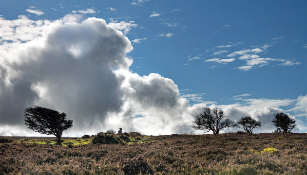 Lonely sheep in Exmoor