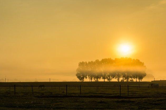 Een gouden winterochtend