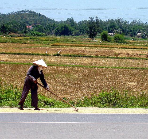 Rijst drogen